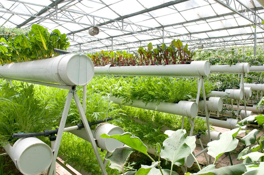 有机蔬菜无土栽培简单介绍