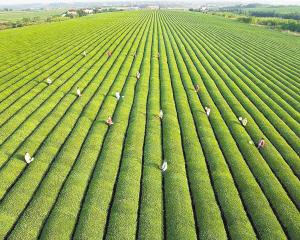 什么是生态农业?