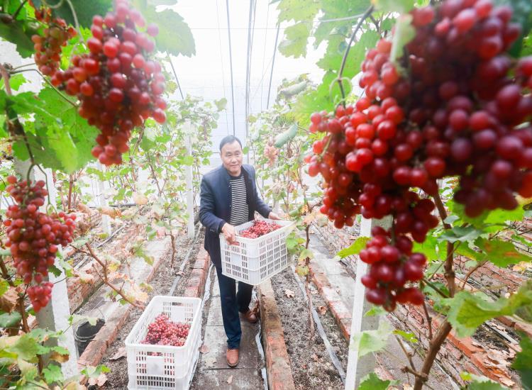 澳吉尔有机新品葡萄即将面市